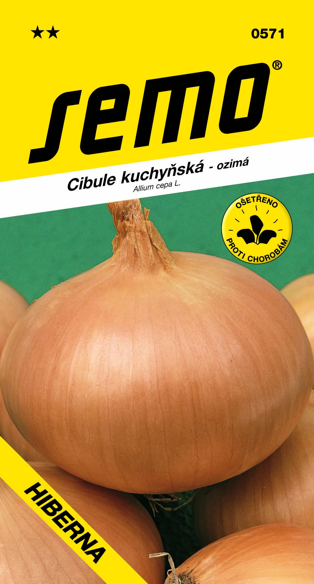 Cibule HIBERNA